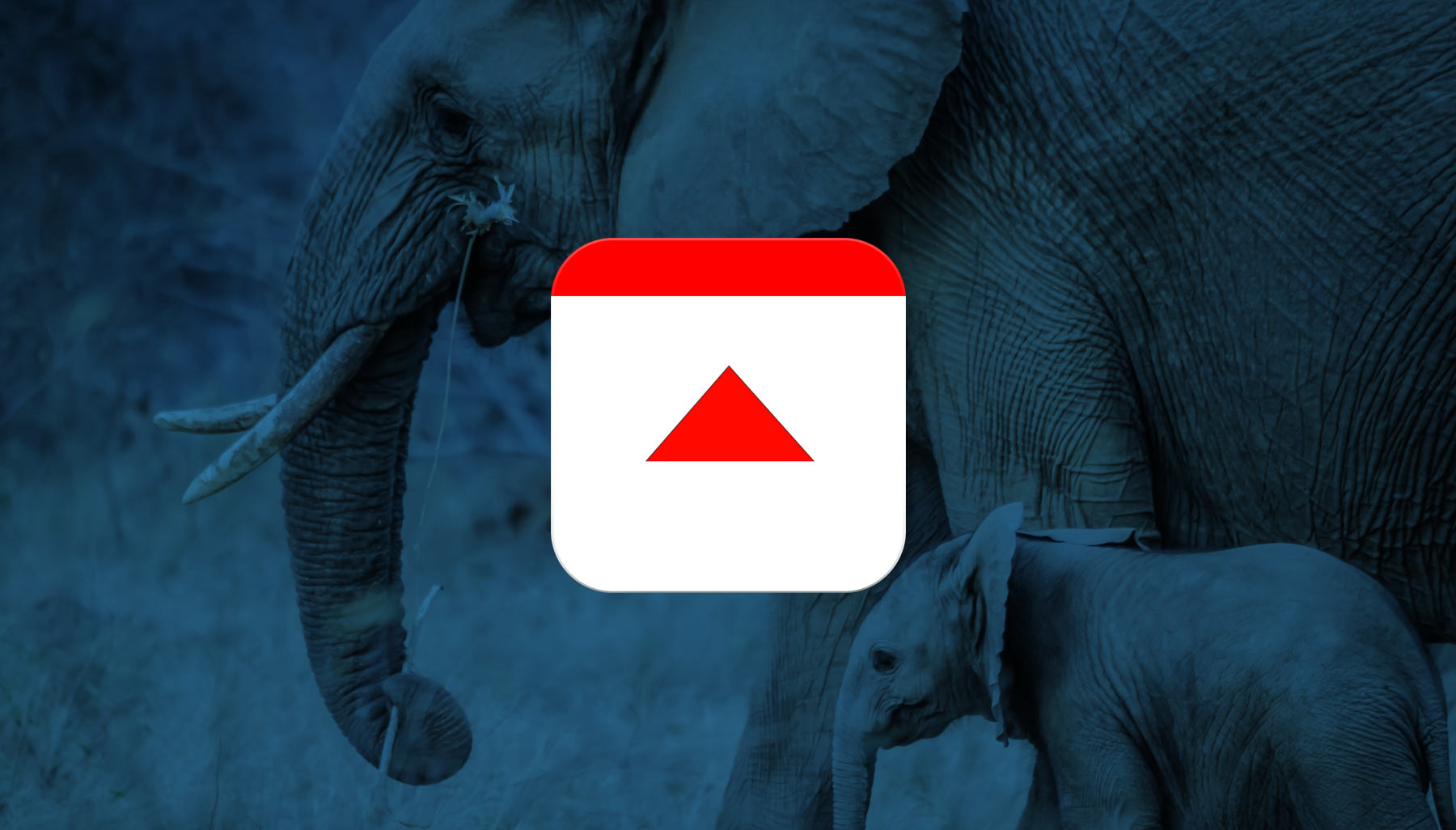 How a Smartphone App is Stopping Elephant Poachers
