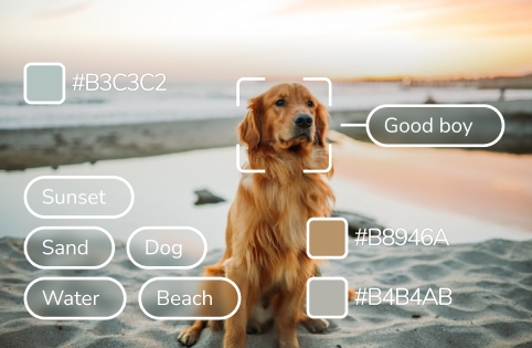 Image showing dog at the beach with an overlay of image attributes like color definitions and image tags