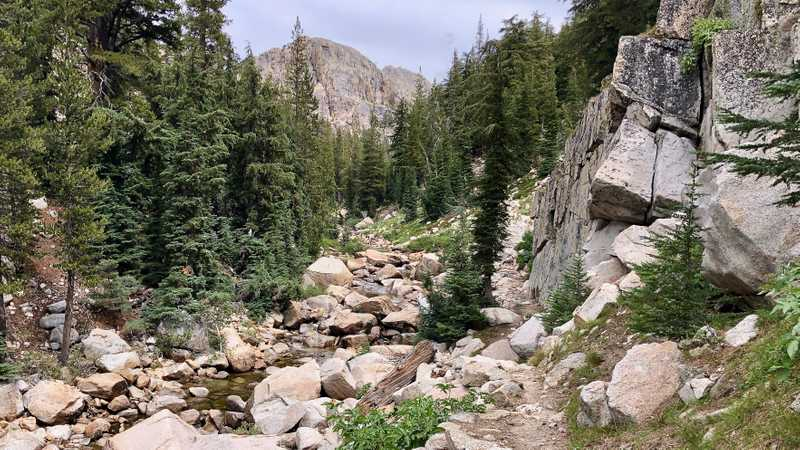 The PCT along Rancheria Creek