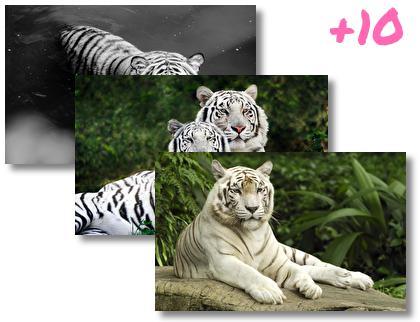 White Tiger theme pack