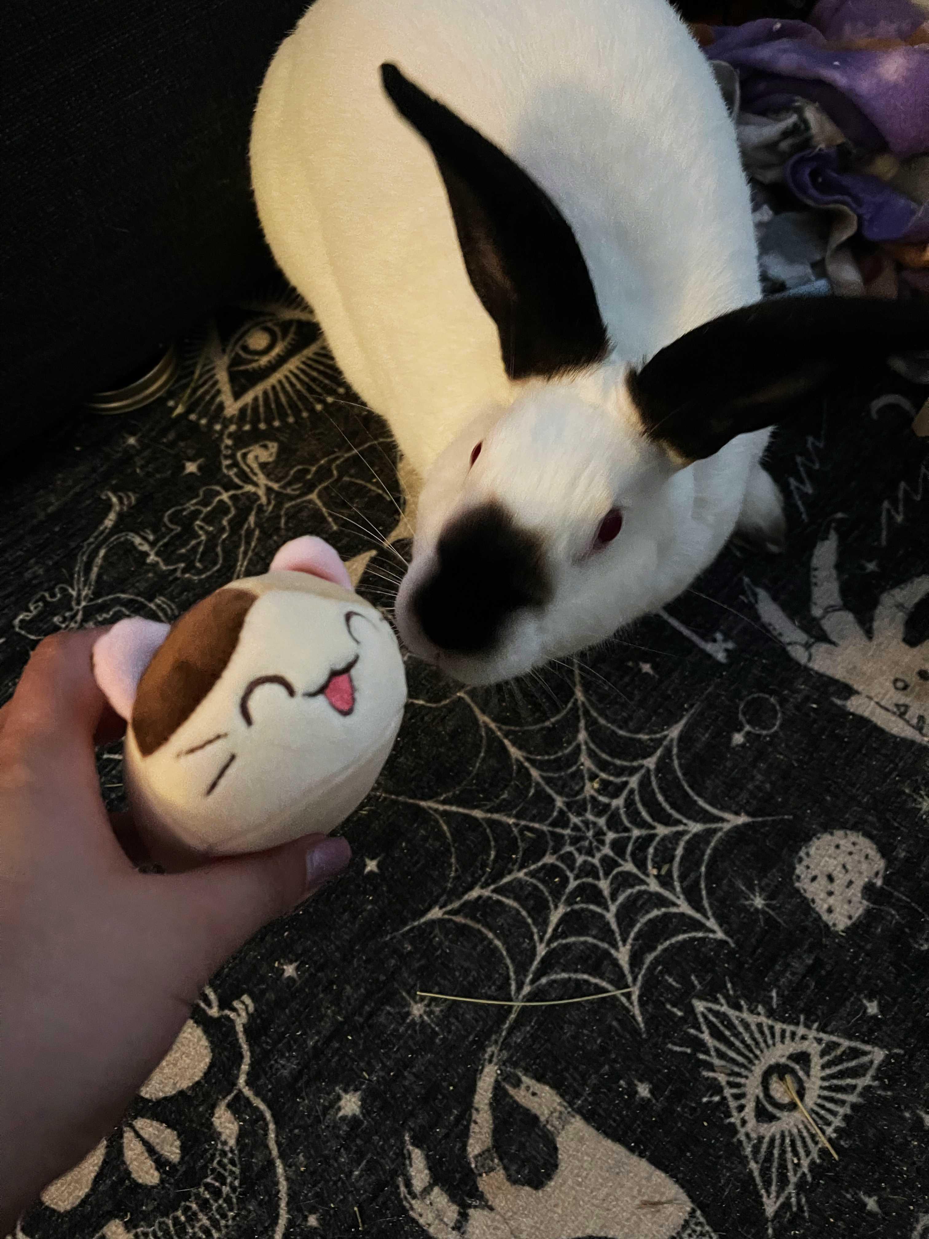 Just my bunny Sabrina being super cute