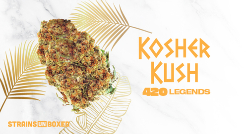 DNA Genetics – Kosher Kush Strain