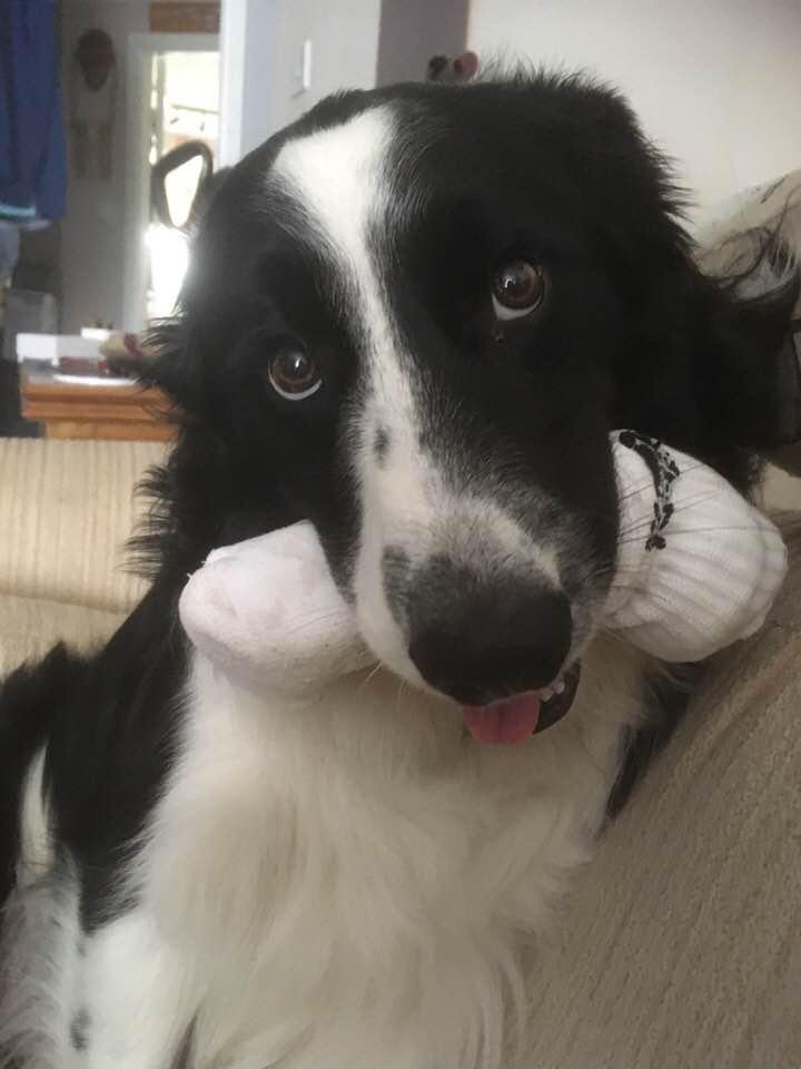 Meet Teddy