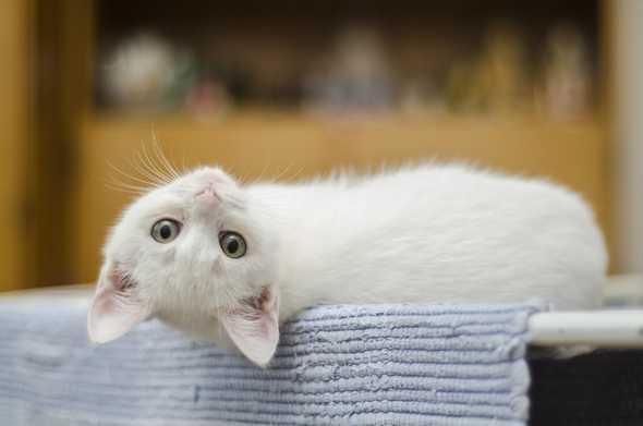 kat die ondersteboven ligt