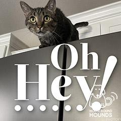 cat-04-hbh