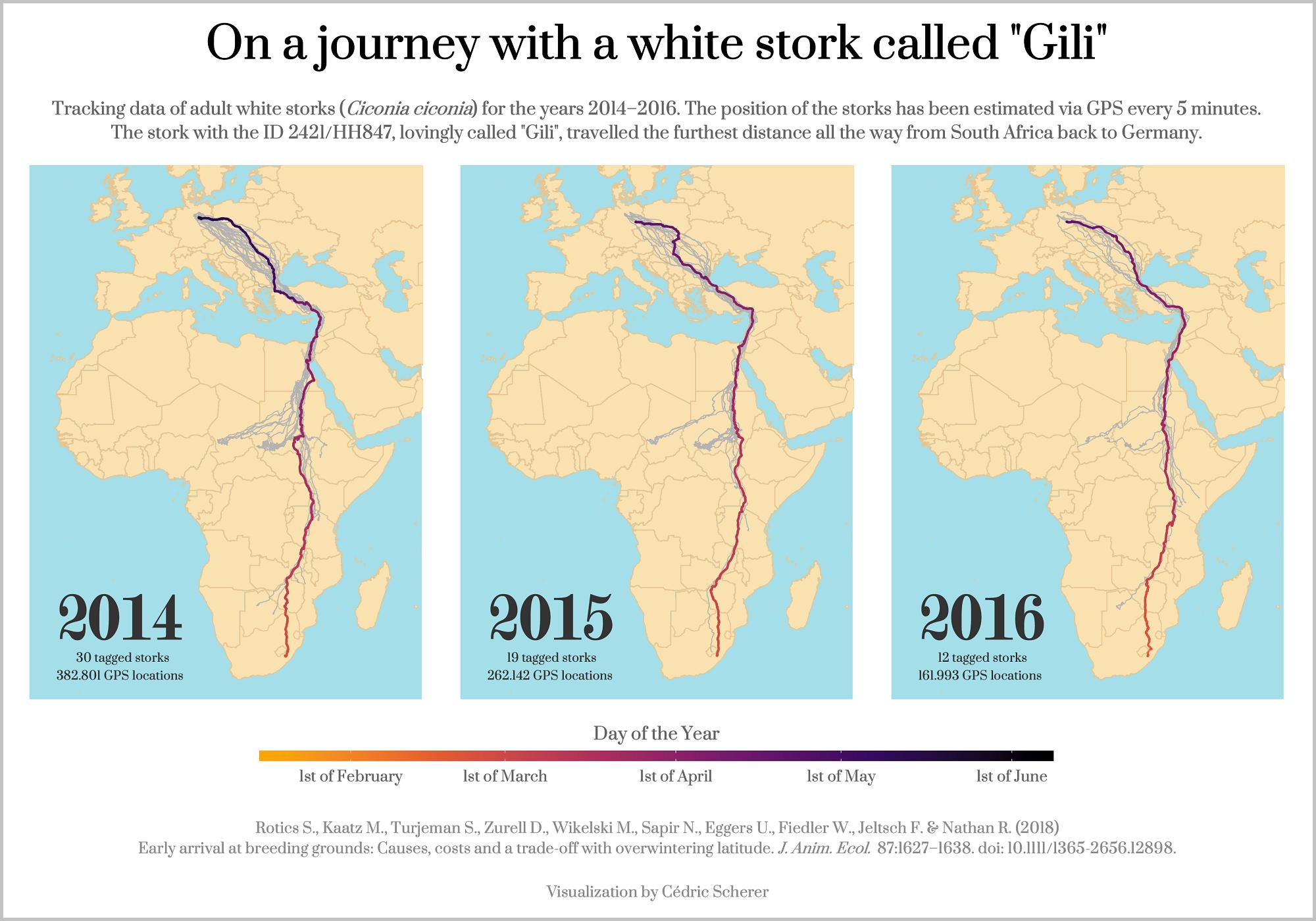 Migration Patterns of White Storks