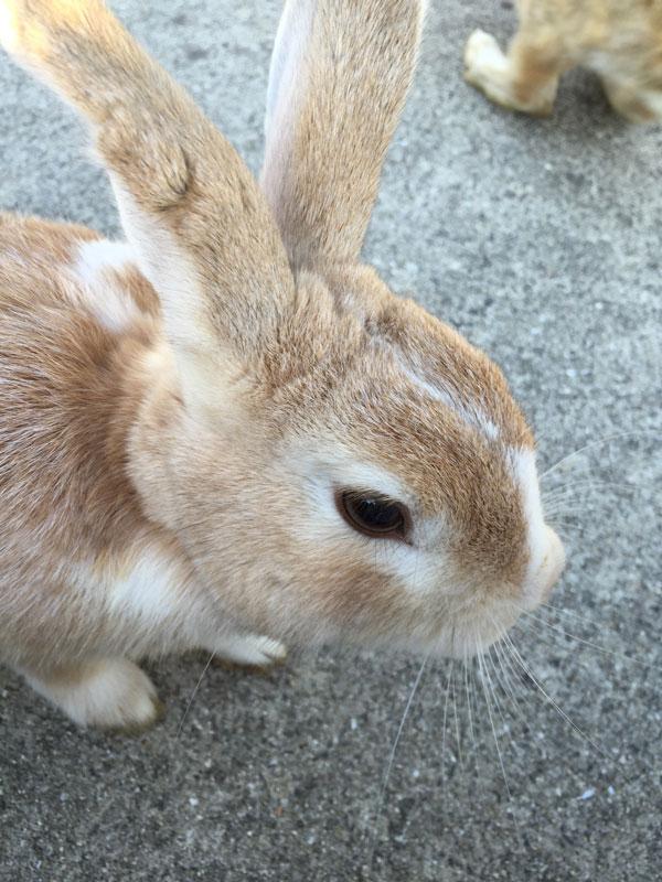 bunny island