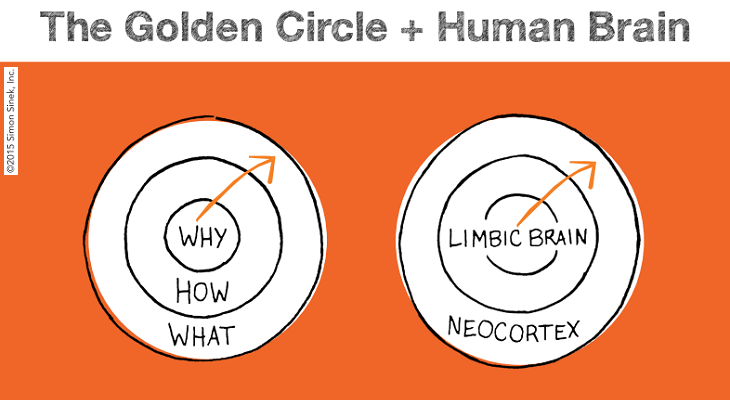 'The Golden Circle' compared to the human brain