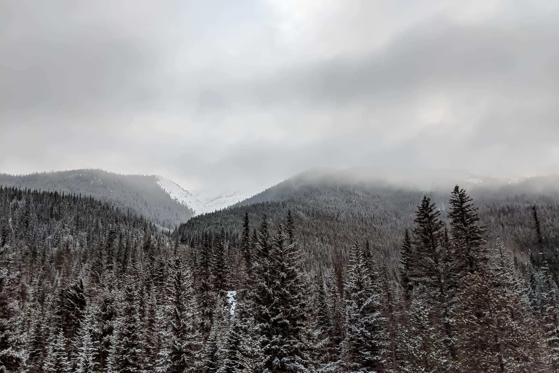 Cold, snow-covered peaks rise out of a pine forest. The clouds of a recently departed snow storm still obscure some of the peaks.