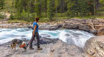 10 Best Summer Vacations For Dogs