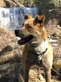 Dog-Friendly Hikes: Northern California