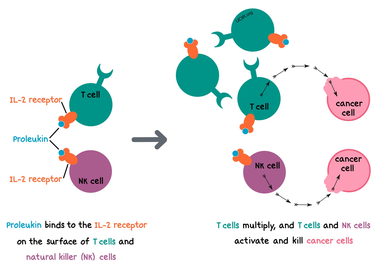 Illustration showing how Proleukin works