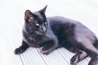 Black cat on the deck