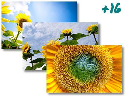 Sunflower theme pack