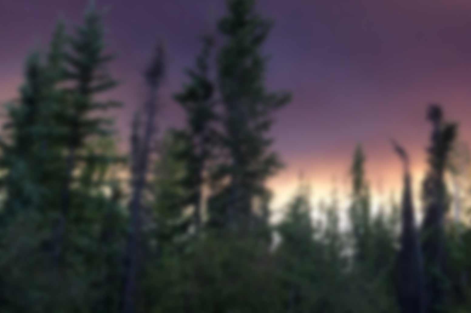 Smoky forest sky