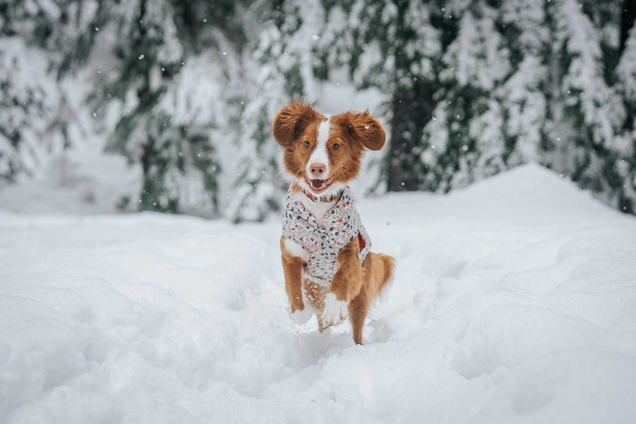 Running in cold weather: tips and tricks for healthy, effective training for you and your dog