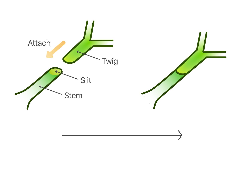 Plant Grafting