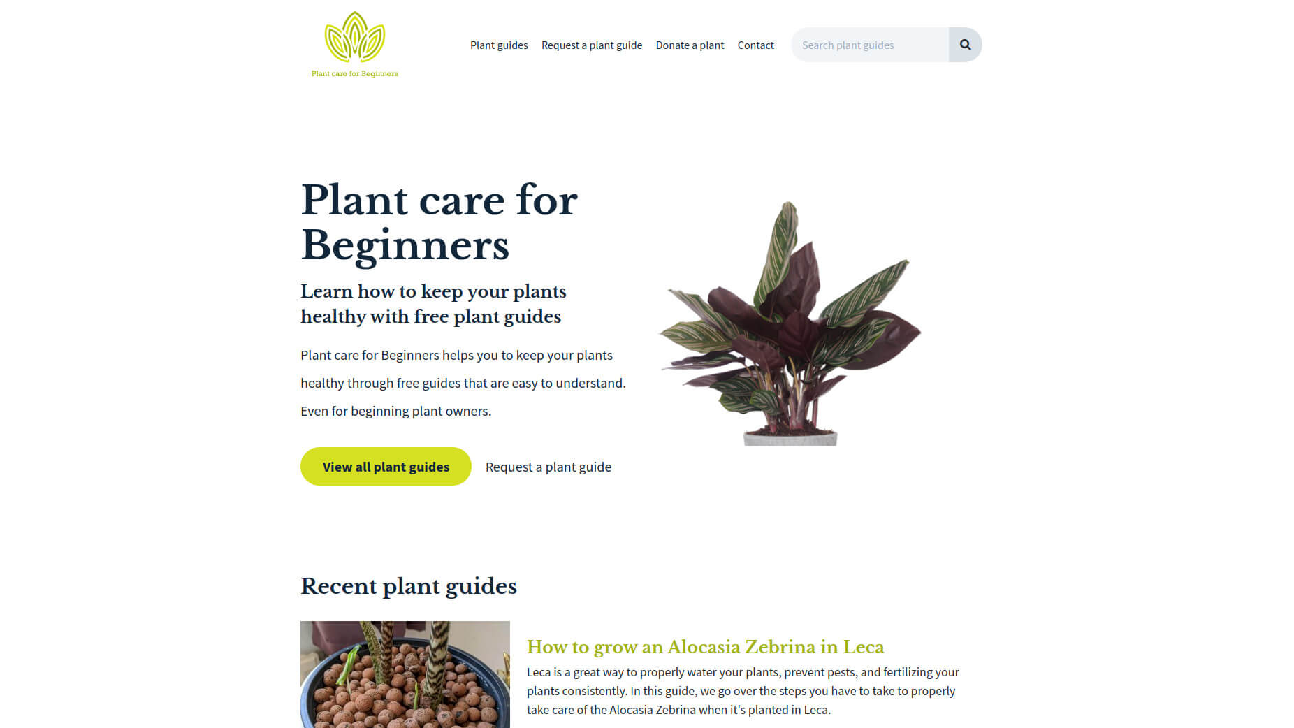 Plant care for beginners