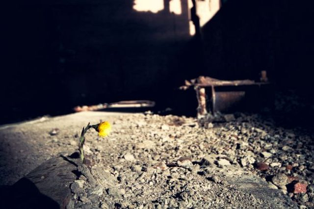 Yellow flower growing in rubble