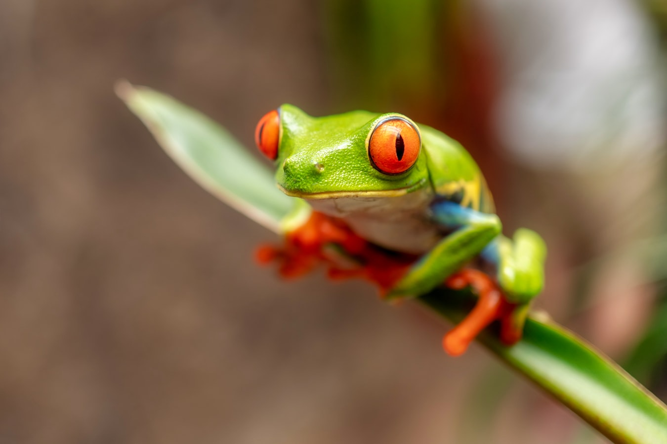 How to use Screaming Frog from the command line