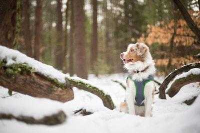 Places to Ski with Your Dog