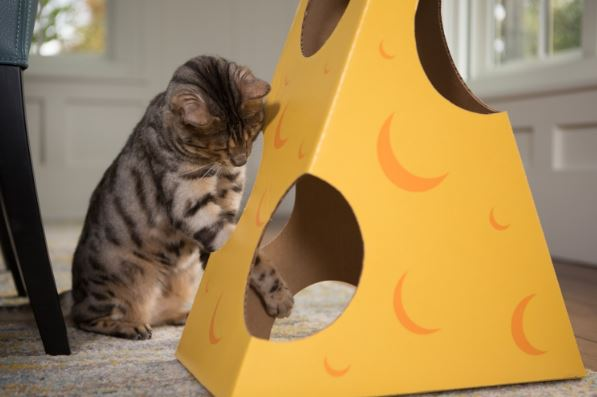 Cat in a Box Cheese Design