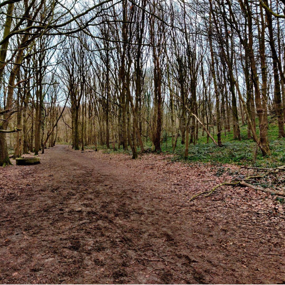 Bramley Fall Woods path in Winter