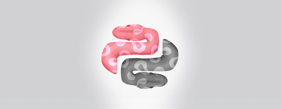 Ulam Labs Adopts Two Python Snakes From Wroclaw ZOO