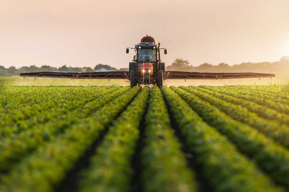 Technology Allows to Track Origin of Food Down to the Roots