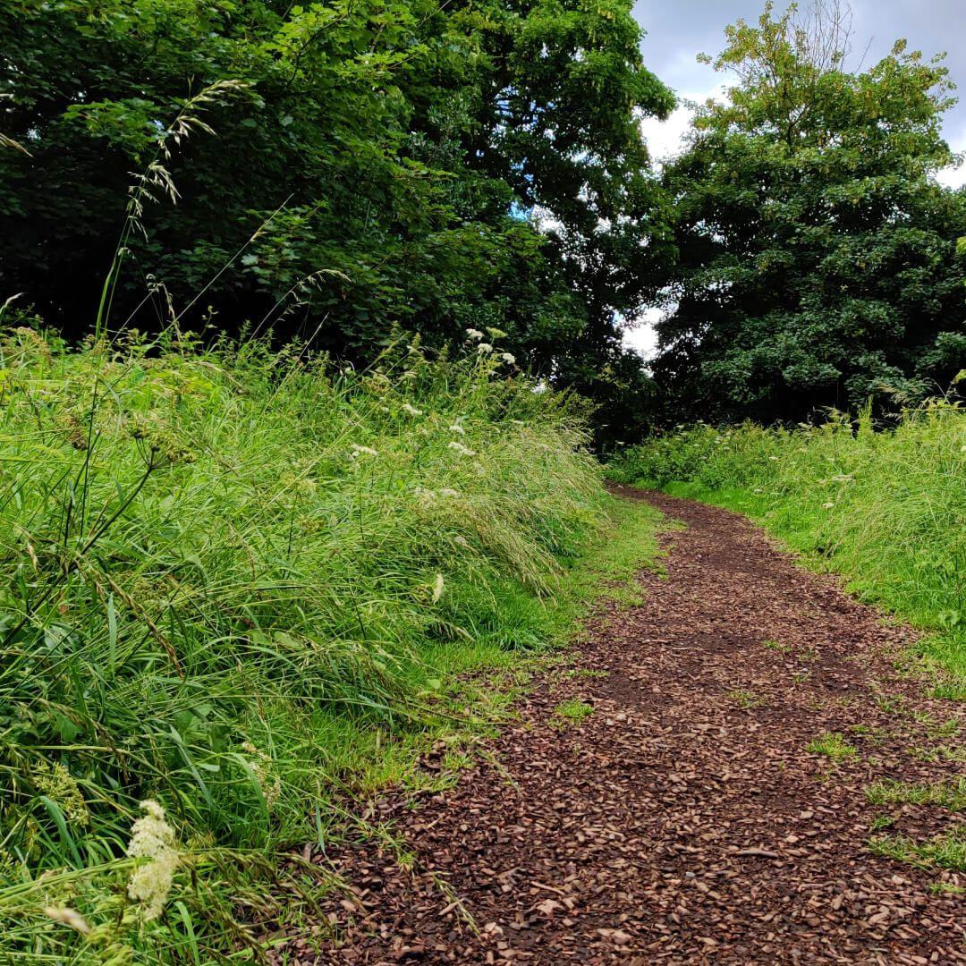 Gotts Park grassy path between trees