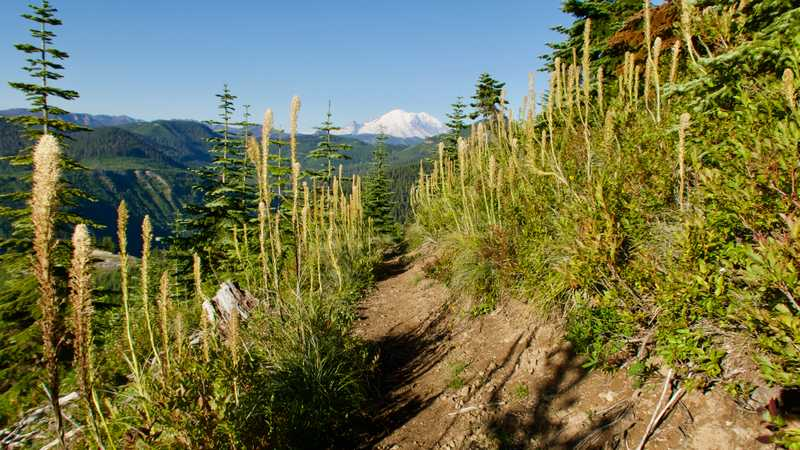 Mt. Rainier stands ahead of the trail