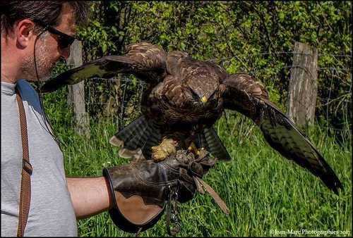 Journées découvertes des rapaces et de la fauconnerie