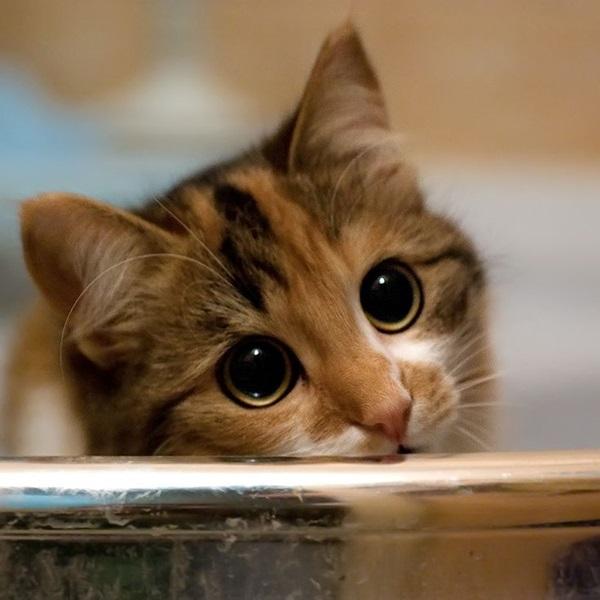 Gatinho fofinho olhando com cara de pidão