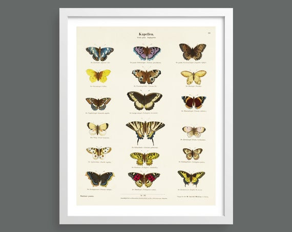 Vintage butterflies insect print