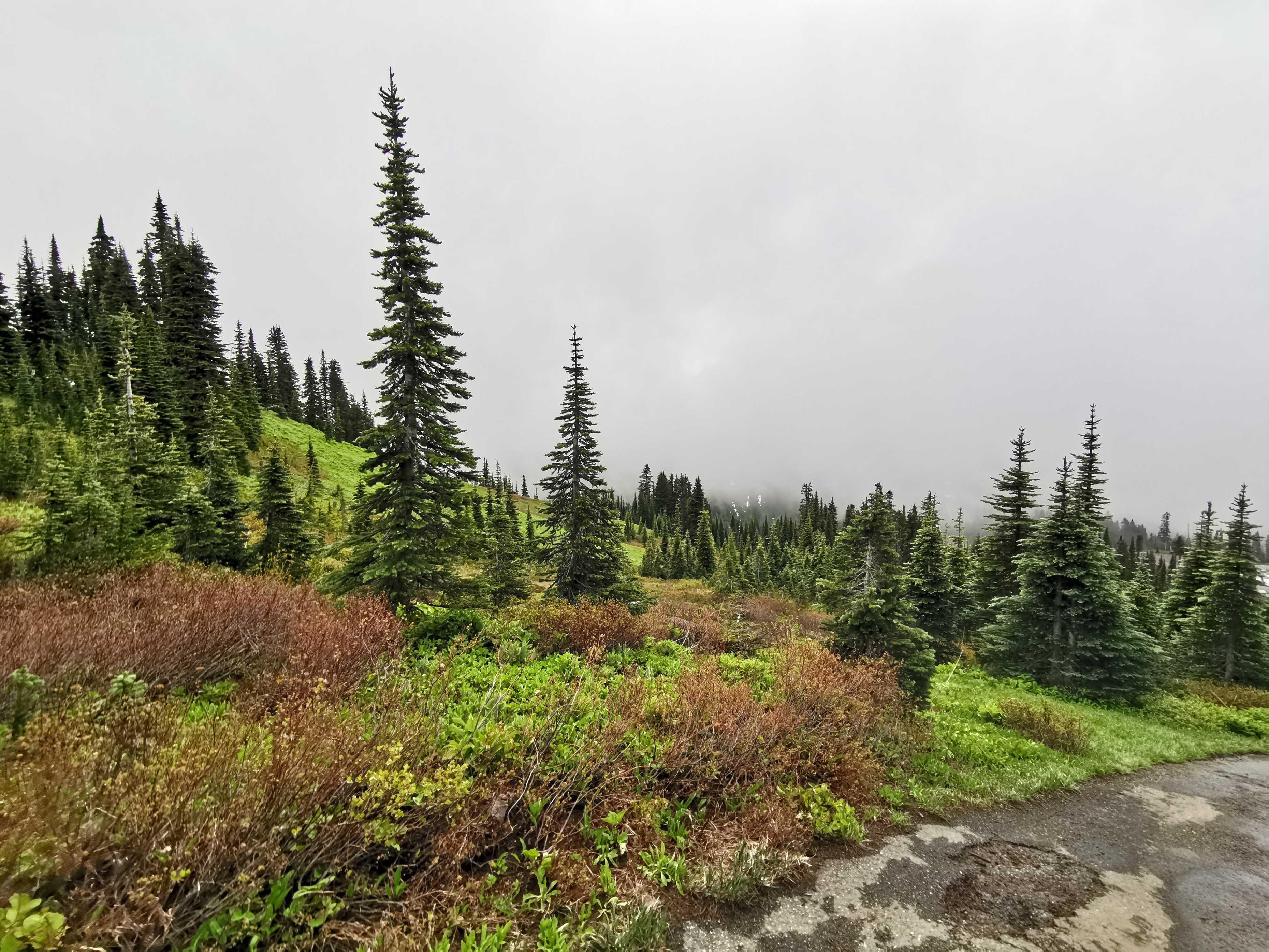 Rendez-vous manqué avec les volcans des Cascades cover image