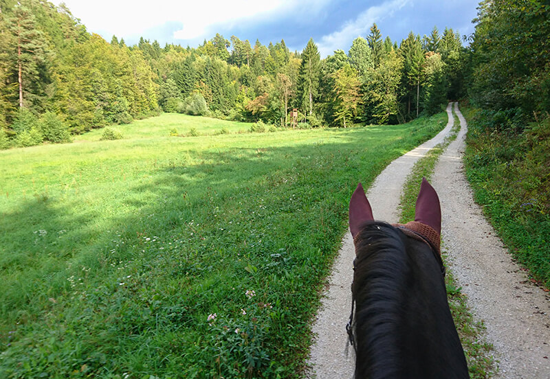 Advice for a novice rider buying their first horse