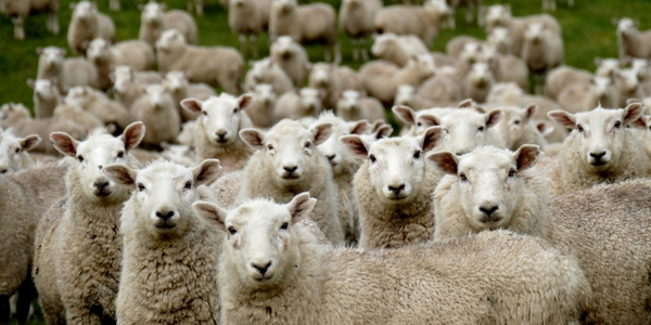 featured image thumbnail for post Do algorithms dream of simulated sheep?