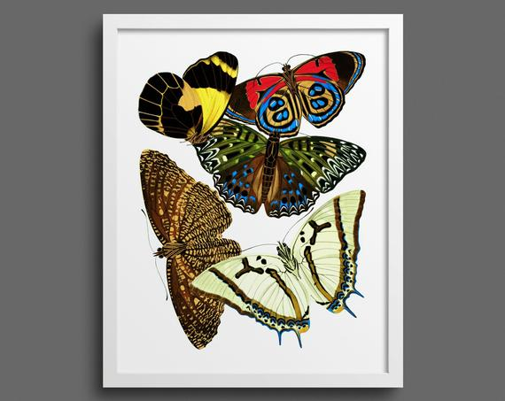 Papillons by EA Seguy - plate 12