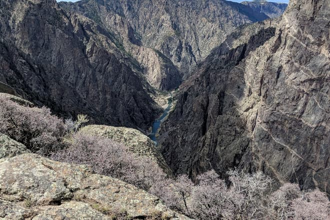 A view down the Gunnison, through the steep, broken walls of the Black Canyon. In the foreground is a row of low desert bushes covered in soft pink buds.