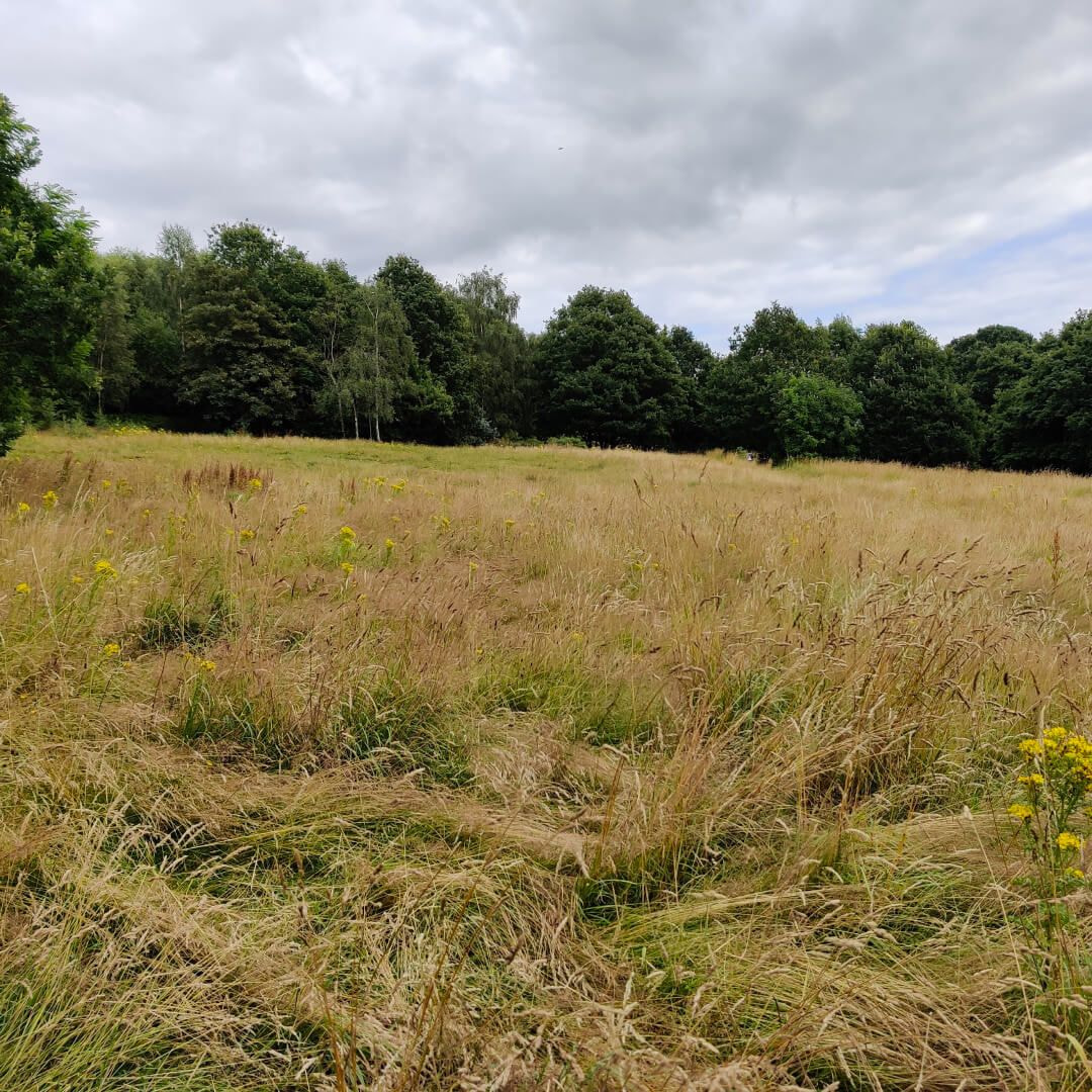 Sugarwell Hill Park Wild Meadow