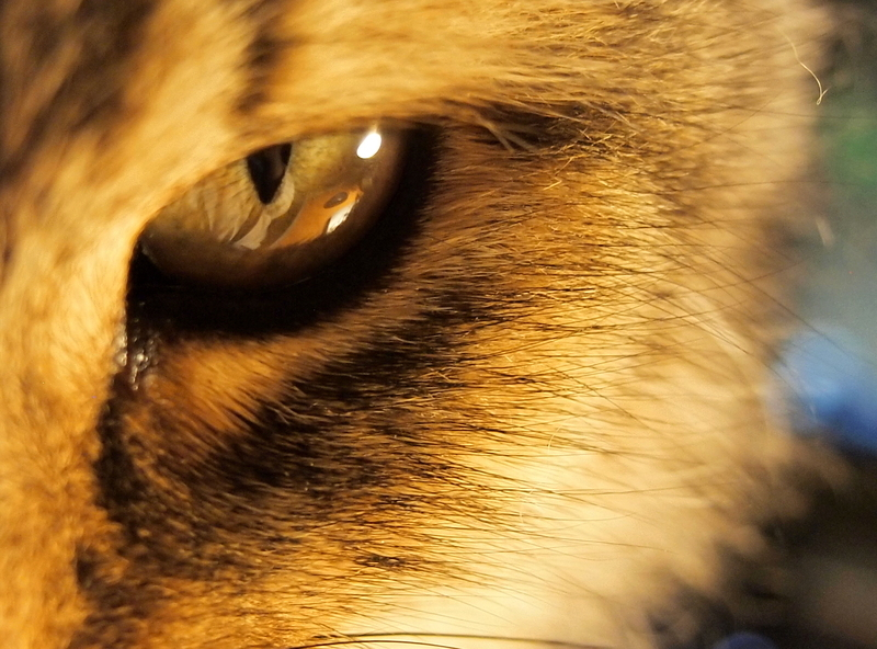 Stare into the cat eye, and generally the cat stares back.