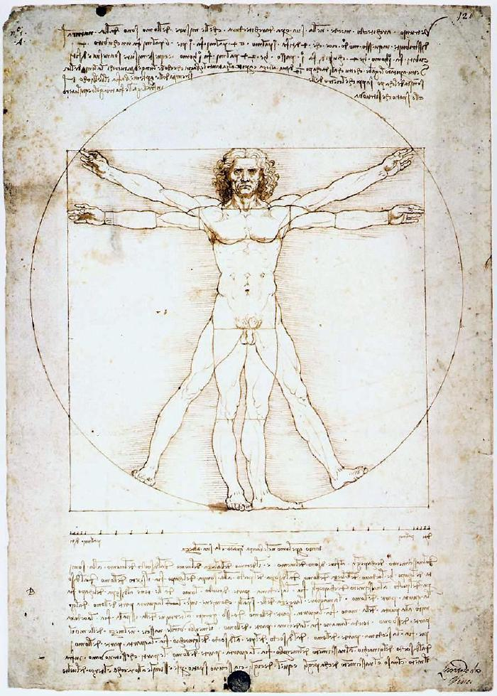 The proportions of man