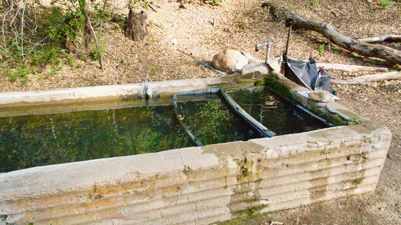 Horse trough of water