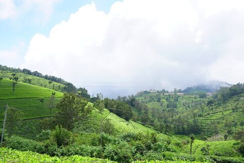 Sunset View | Prime Real Estate Plots for Sale in Coonoor image
