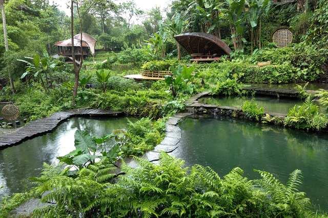 Magic Green - Bambu Indah