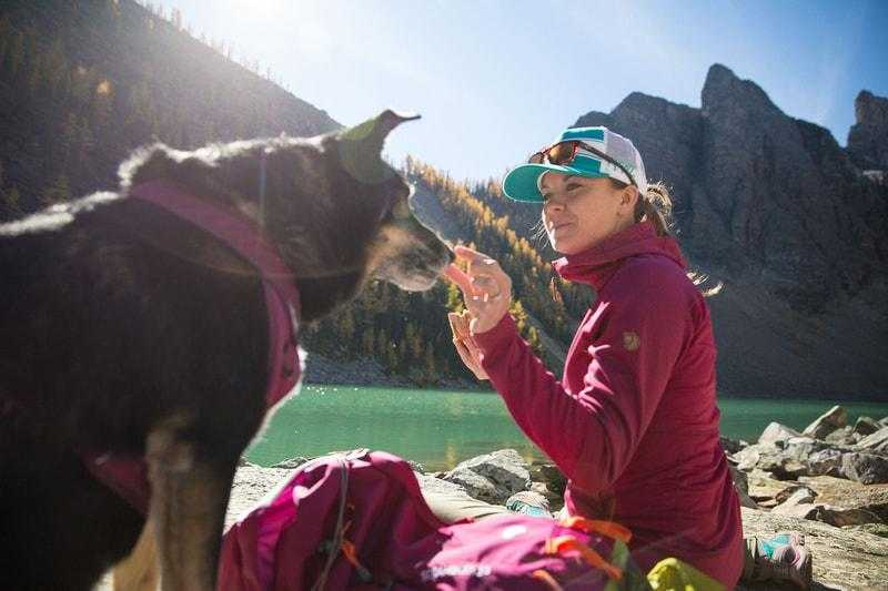5 National Parks That Will Welcome Your Dog