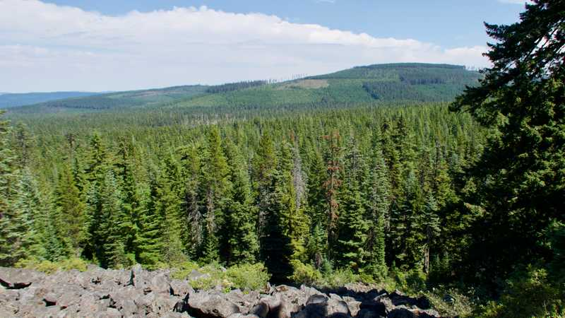 A view of the patchwork forest