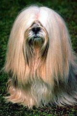 Every dog has his bark