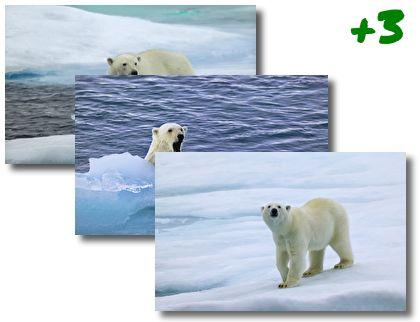 Bear theme pack