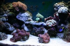 Starting a Saltwater Aquarium